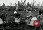 Image of Russian women work removing stumps Archangel Russia, 1918, second 10 stock footage video 65675029280