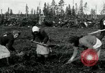 Image of Russian women work removing stumps Archangel Russia, 1918, second 11 stock footage video 65675029280