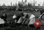 Image of Russian women work removing stumps Archangel Russia, 1918, second 12 stock footage video 65675029280
