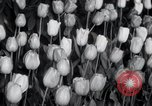 Image of Annual Flower Show New York United States USA, 1937, second 11 stock footage video 65675029440