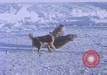 Image of huskies Antarctica, 1950, second 12 stock footage video 65675029543