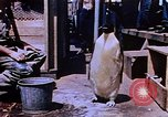 Image of emperor penguins Antarctica, 1950, second 4 stock footage video 65675029547