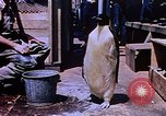 Image of emperor penguins Antarctica, 1950, second 5 stock footage video 65675029547