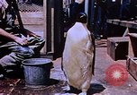 Image of emperor penguins Antarctica, 1950, second 6 stock footage video 65675029547