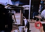 Image of emperor penguins Antarctica, 1950, second 9 stock footage video 65675029547