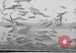 Image of fishing United States USA, 1920, second 4 stock footage video 65675029621