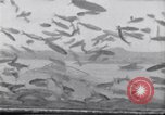 Image of fishing United States USA, 1920, second 6 stock footage video 65675029621