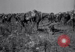 Image of Indian Cavalry France, 1918, second 7 stock footage video 65675029641