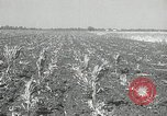 Image of drought United States USA, 1936, second 11 stock footage video 65675029715