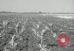 Image of drought United States USA, 1936, second 12 stock footage video 65675029715