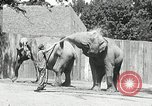 Image of zoo Washington DC USA, 1936, second 6 stock footage video 65675029716
