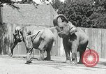 Image of zoo Washington DC USA, 1936, second 7 stock footage video 65675029716