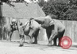 Image of zoo Washington DC USA, 1936, second 8 stock footage video 65675029716