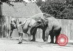 Image of zoo Washington DC USA, 1936, second 9 stock footage video 65675029716