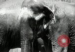 Image of zoo Washington DC USA, 1936, second 10 stock footage video 65675029716