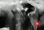Image of zoo Washington DC USA, 1936, second 11 stock footage video 65675029716