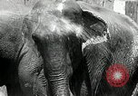 Image of zoo Washington DC USA, 1936, second 12 stock footage video 65675029716
