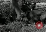 Image of Fromm Brothers Nieman Company silver fox fur farm Thiensville Wisconsin USA, 1934, second 18 stock footage video 65675029774