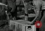 Image of Fromm Brothers Nieman Company silver fox fur farm Thiensville Wisconsin USA, 1934, second 30 stock footage video 65675029774