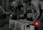 Image of Fromm Brothers Nieman Company silver fox fur farm Thiensville Wisconsin USA, 1934, second 31 stock footage video 65675029774