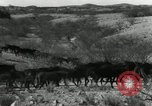 Image of untamed horses Sasabe Arizona USA, 1934, second 8 stock footage video 65675029776