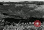 Image of untamed horses Sasabe Arizona USA, 1934, second 9 stock footage video 65675029776