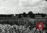 Image of farming activities Southville Kentucky USA, 1950, second 7 stock footage video 65675029785