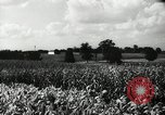 Image of farming activities Southville Kentucky USA, 1950, second 8 stock footage video 65675029785