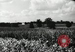 Image of farming activities Southville Kentucky USA, 1950, second 9 stock footage video 65675029785