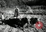 Image of farming activities Southville Kentucky USA, 1950, second 11 stock footage video 65675029785