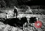 Image of farming activities Southville Kentucky USA, 1950, second 12 stock footage video 65675029785