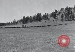 Image of American buffalo round-up South Dakota United States, 1934, second 3 stock footage video 65675029846