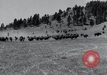 Image of American buffalo round-up South Dakota United States, 1934, second 8 stock footage video 65675029846