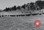Image of American buffalo round-up South Dakota United States USA, 1934, second 9 stock footage video 65675029846