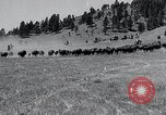Image of American buffalo round-up South Dakota United States, 1934, second 10 stock footage video 65675029846