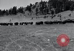 Image of American buffalo round-up South Dakota United States USA, 1934, second 12 stock footage video 65675029846
