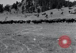 Image of American buffalo round-up South Dakota United States, 1934, second 13 stock footage video 65675029846