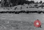 Image of American buffalo round-up South Dakota United States, 1934, second 14 stock footage video 65675029846
