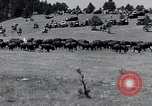 Image of American buffalo round-up South Dakota United States, 1934, second 15 stock footage video 65675029846