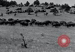 Image of American buffalo round-up South Dakota United States, 1934, second 16 stock footage video 65675029846