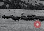 Image of American buffalo round-up South Dakota United States, 1934, second 17 stock footage video 65675029846