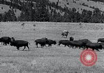 Image of American buffalo round-up South Dakota United States, 1934, second 18 stock footage video 65675029846
