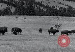 Image of American buffalo round-up South Dakota United States, 1934, second 19 stock footage video 65675029846