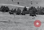 Image of American buffalo round-up South Dakota United States, 1934, second 20 stock footage video 65675029846