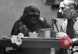 Image of trained gorilla bank robbery Cincinnati Ohio USA, 1934, second 7 stock footage video 65675029855