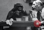 Image of trained gorilla bank robbery Cincinnati Ohio USA, 1934, second 8 stock footage video 65675029855