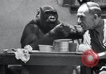 Image of trained gorilla bank robbery Cincinnati Ohio USA, 1934, second 9 stock footage video 65675029855