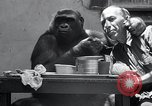 Image of trained gorilla bank robbery Cincinnati Ohio USA, 1934, second 10 stock footage video 65675029855