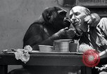 Image of trained gorilla bank robbery Cincinnati Ohio USA, 1934, second 11 stock footage video 65675029855
