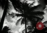 Image of coconut palms Puerto Rico, 1941, second 10 stock footage video 65675029922